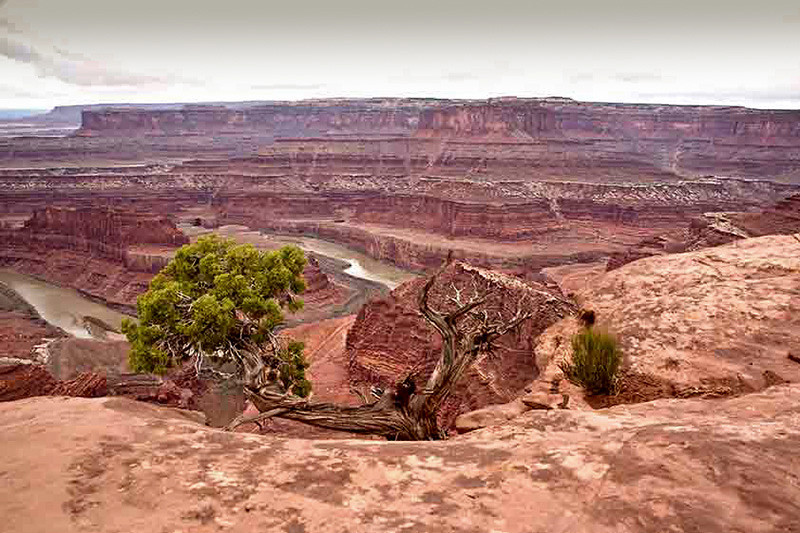 Dead Horse Point State Park Photo by Jack Martin