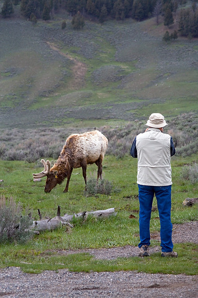 Pete Photographing an Elk 8159W8