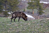 Wolf 8137W8