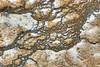"""Narwhal surfaces at Yellowstone"" by John Palmer"