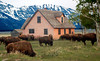 Mormon Row House, Grand Teton NP by Richard Rowland