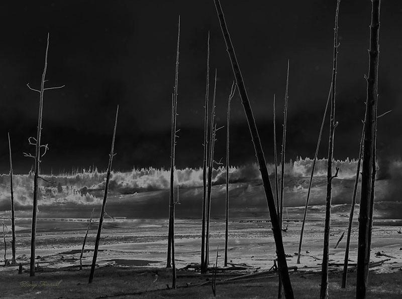 Heat affected Trees - Doug Farrell