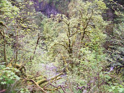 Oregon Day 1 use 015