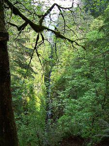 Oregon Day 1 use 022