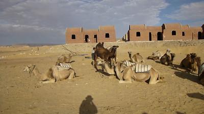 08 Camel Ride072