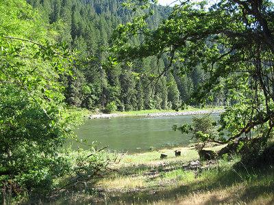Rogue River Panoramabob 013