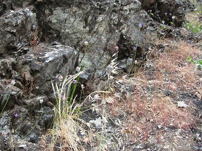 Rogue River Panoramabob 074