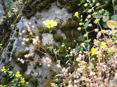 Rogue River Panoramabob 068