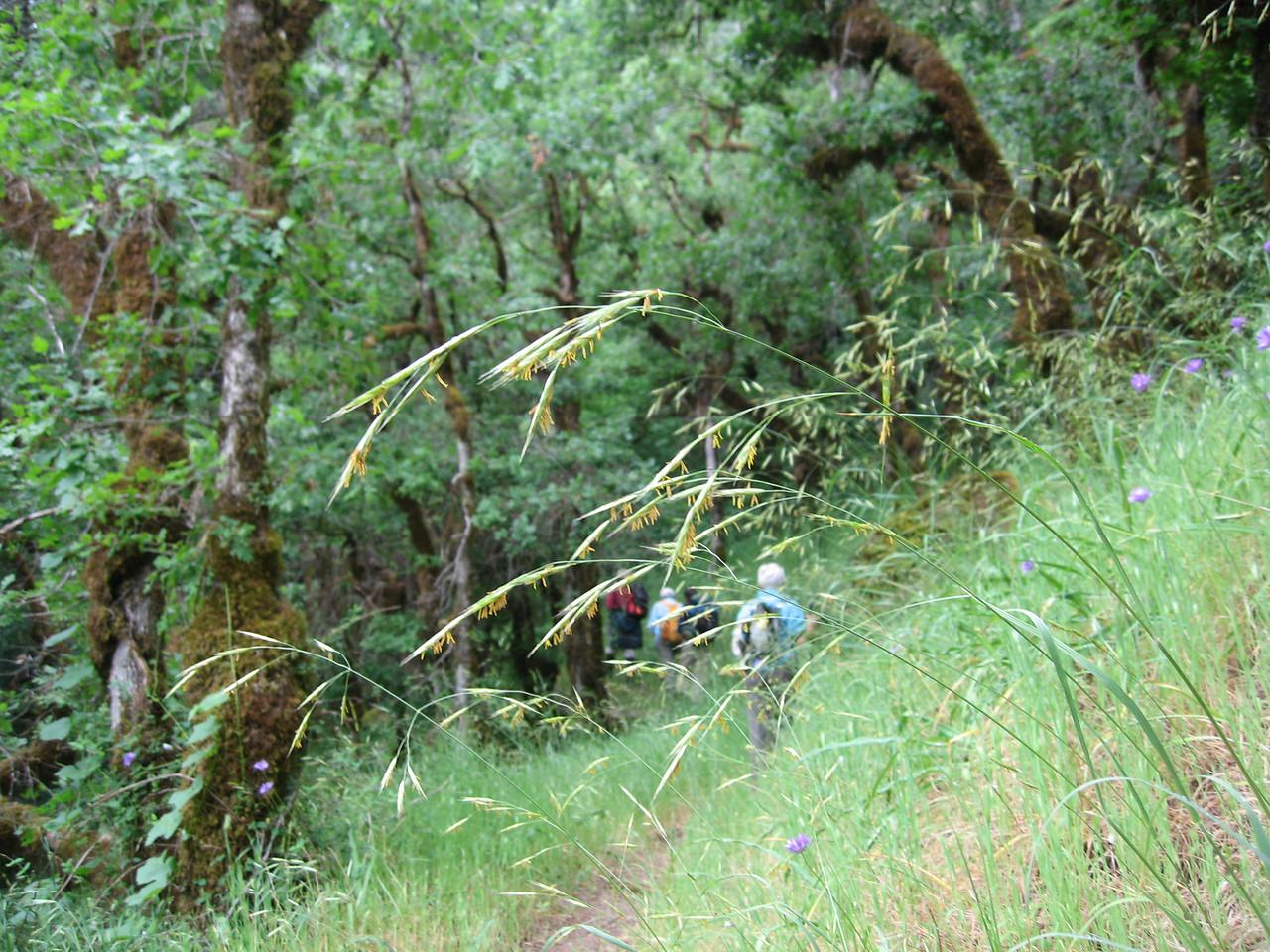 Rogue River Panoramabob 102