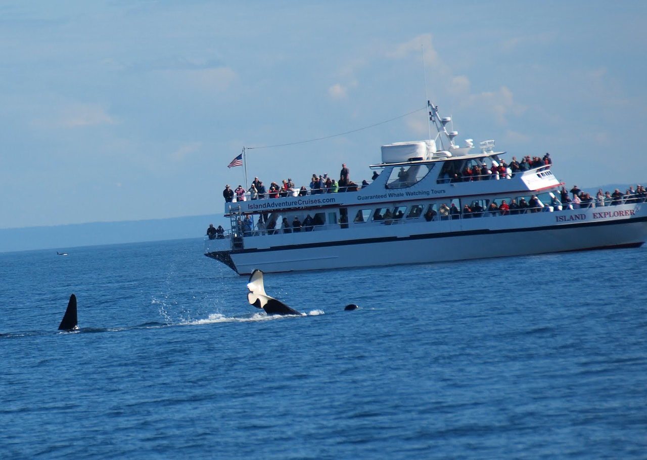 Couldn't believe how many Orcas we saw on this trip - they were everywhere!  We have been on lots of whale watching tours, but have never seen this many before.A trip of a lifetime!