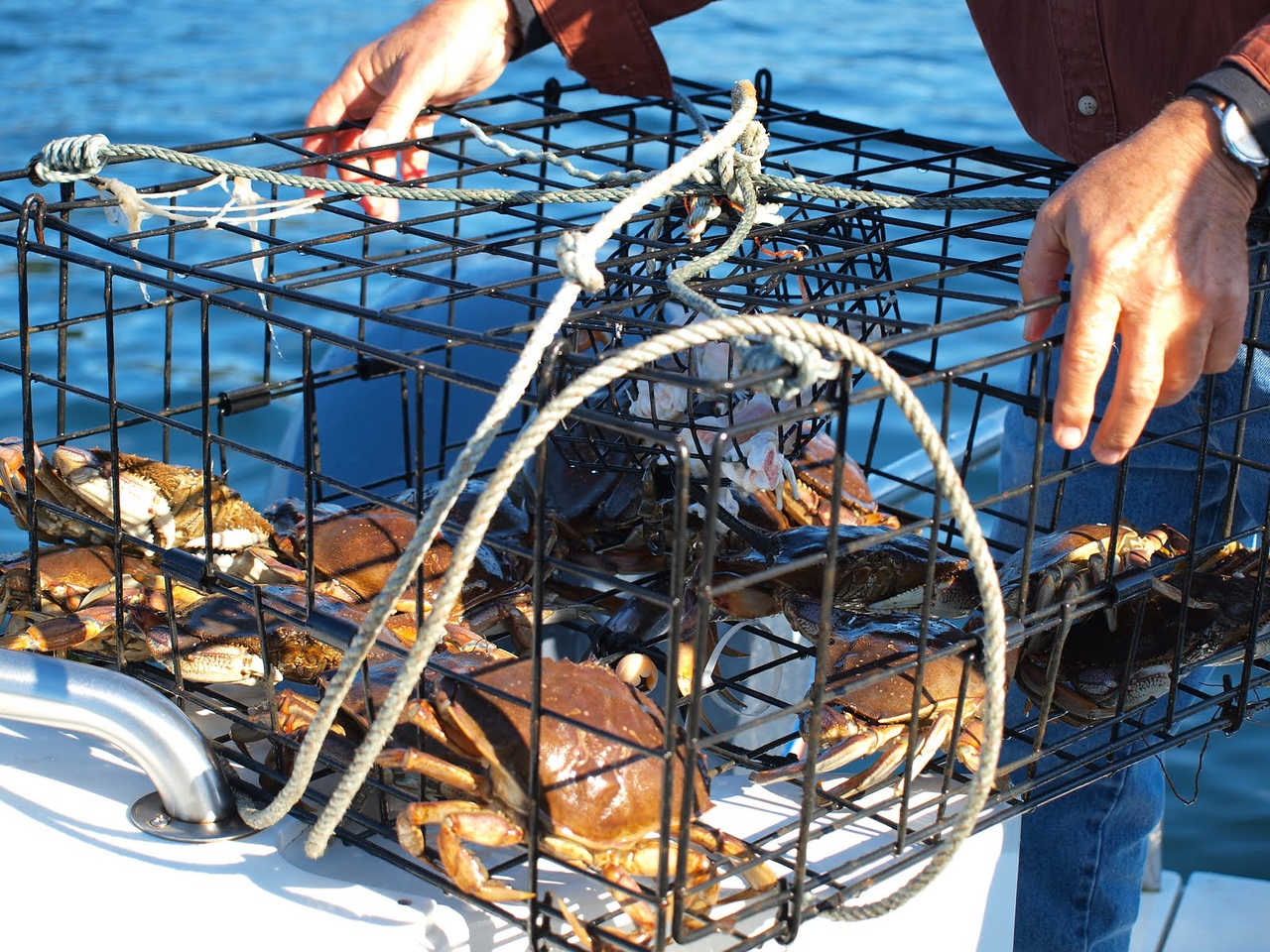 Yes there were a few crabs and Captain Jim gave us a couple of them.