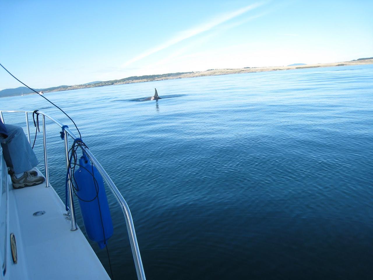 Pretty close to the boat!