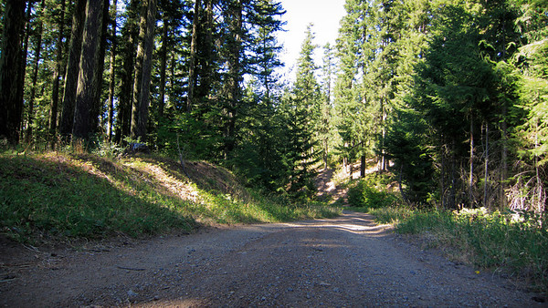 Forest road on the WABDR