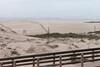 Near the beach at Oso Flaco Lake