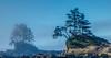 Ocean trees around KM 51