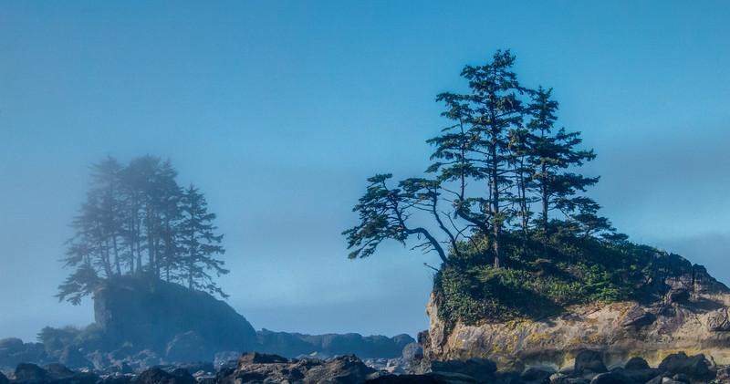 Coastal trees above the surf