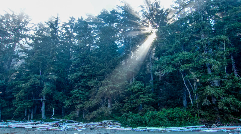 Morning sun shines through coastal trees