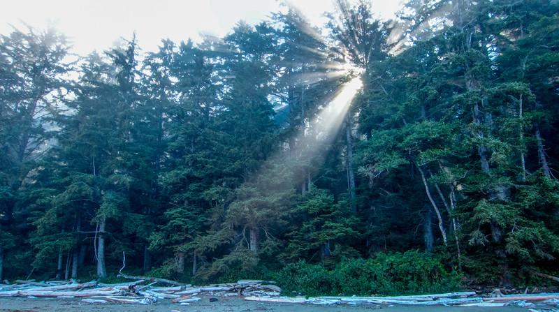 Morning sun shines through coastal trees