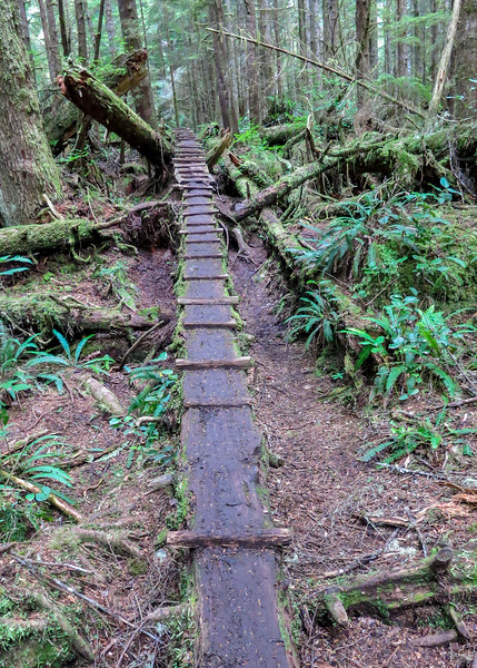 Trail over downed log