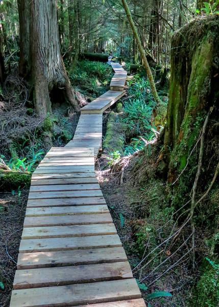 Boardwalk trail at 33 KM