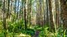 Forest trail around KM 37