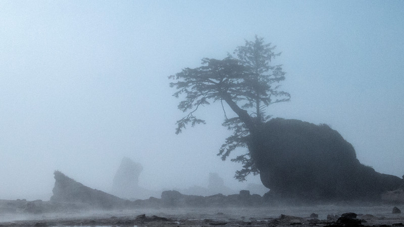 Coastal tree in the morning fog