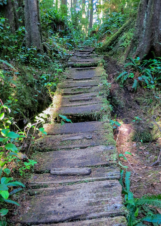 Old planks guide the trail path