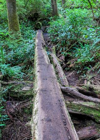 more log crossing