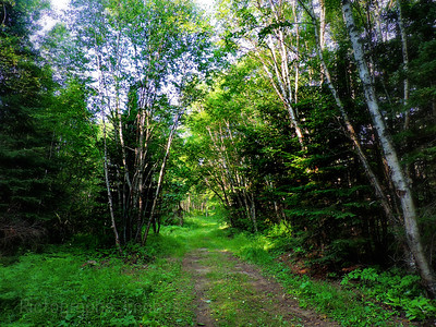 Trees, Nature,