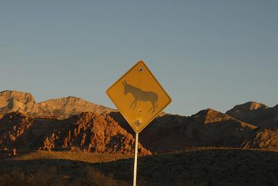 Wild horses and burros roam the desert.