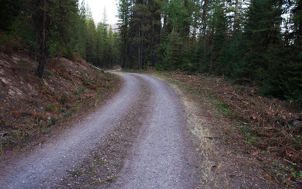 "National forest road near Hungry Horse, Montana (note the work of the brush cutter). I followed this road for around 5 miles before it ended.  When I got back to the beginning I discovered a sign reading, ""Do Not Enter"". Oops! 2011."