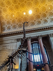 American Museum of Natural History - New York City, New York