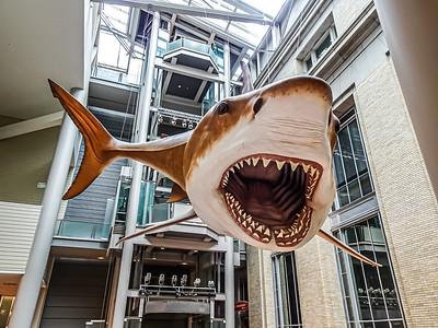 Smithsonian National Museum of Natural History - Washington, DC