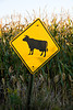 Cattle Crossing Sign, Juneau County, Wisconsin