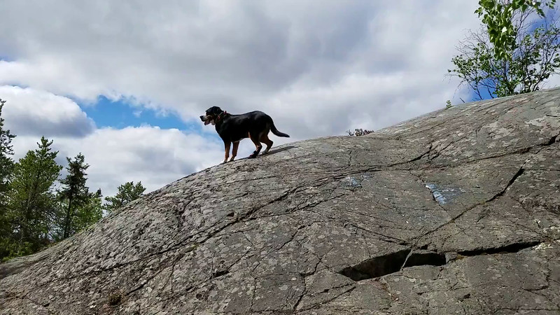 Being a Swiss Mountain Dog