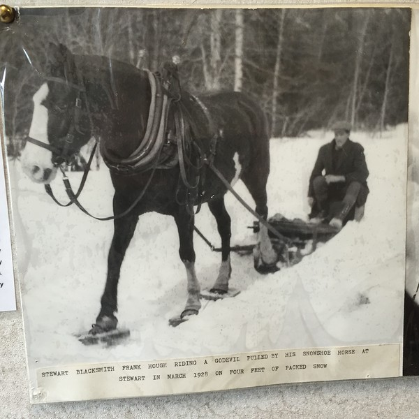 Snow shoes for horse