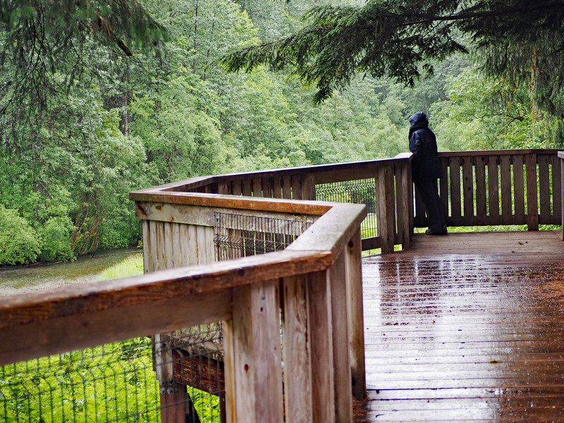 Fish Creek - where the Grizzlies and Black Bears fish in Late July-September