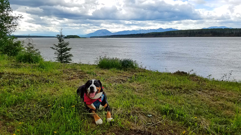 By the Liard River in Blackstone Territorial park