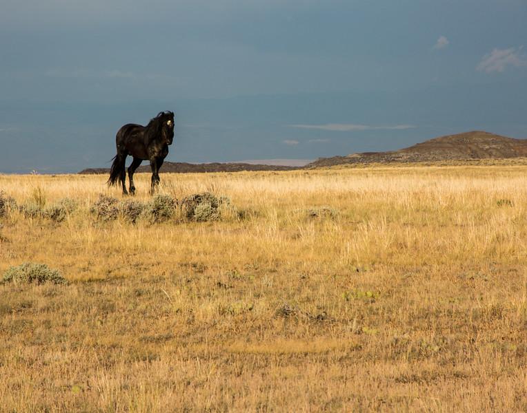Lone Horse