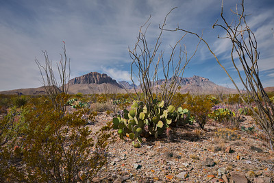 Big Bend National Park, Texas, 2020 14