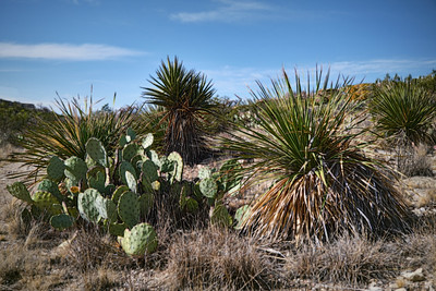 Chihuahuan Desert, New Mexico 2020 2