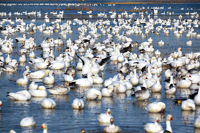 Bosque del Apache Wildlife Refuge, New Mexico 2020 5