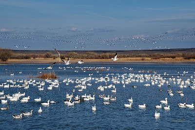 Bosque del Apache Wildlife Refuge, New Mexico 2020 2