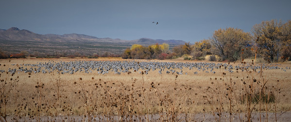 Bosque del Apache Wildlife Refuge, New Mexico 2020