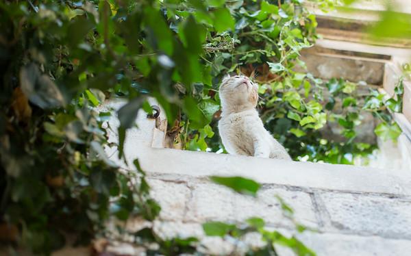 Curious cat in Trogir, Croatia