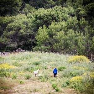 Taking the goats for a walk - Brac, Croatia
