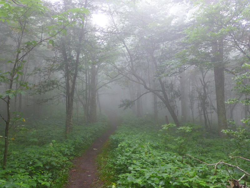 Appalachian Trail near Yellow Gap