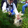 Happy dog .... on the way up Roan Mountain, Baxter decided he needed some lovin'.   See next photo for all the lovin' he got!!