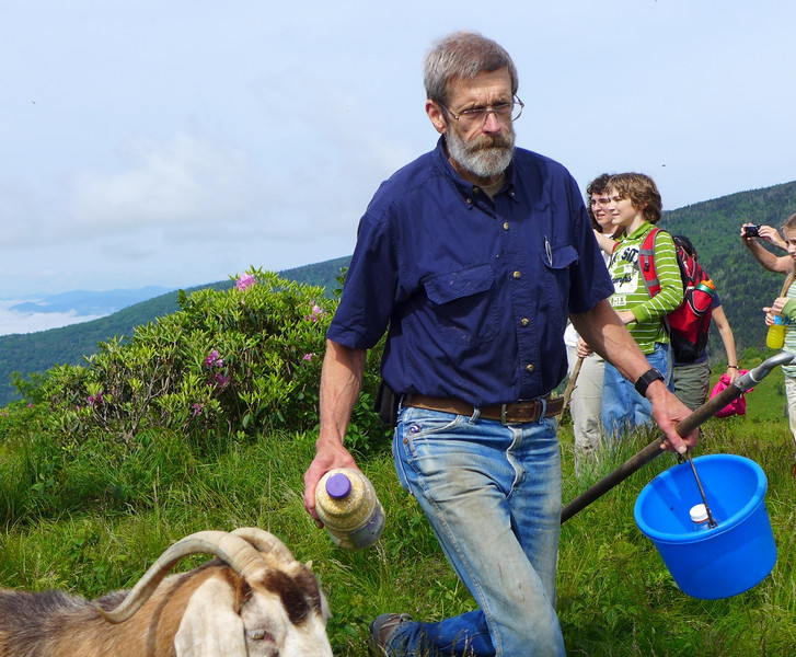 "Todd Eastin, owner of the goats, heading up past Jane Bald on Roan Mountain during the 2013 Herding of the Goats.  <a href=""http://baatany.org/"">Please see this webpage</a> for more info."