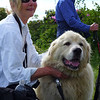 """Baxter, shown here with Linda, along with Bigdog, are the two watchdogs for the Goats on Roan Mountain.  Linda """"<b><u><a href=""""http://baatany.org/adopt_dog.html"""">adopted</a></u></b>"""" Baxter for the summer, being one of our many supporters of this program.  If you want, you can """"<b><u><a href=""""http://baatany.org/adopt_goat.html"""" rel=""""nofollow"""">adopt</a></u></b>"""" a goat, or Bigdog and help support this all volunteer program."""